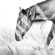 """""""I alone cannot change the world, but I can cast a stone across the water to create many ripples"""" ~ Mother Teresa<br /> <br /> Tracie Spence's fine art photography series of The Spanish Wild Mustangs."""