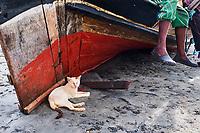 Kenya, archipel de Lamu, ville de Lamu patrimoine mondial de l'Unesco, chats des rues // Kenya, Lamu island, Lamu town, Unesco world heritage, street cats