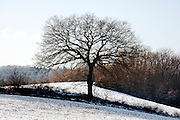 bare leafless tree with snow on the ground