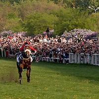 Racing horses compete during the Hungary Grand Prix at Kincsem Park. Budapest, Hungary. Sunday, 19. April 2009. ATTILA VOLGYI