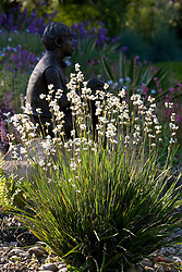 Backlit Libertia paniculata with statue of 'Boy on a Rock' by Jane Hogben in the background