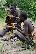 Hadza men eating honeycomb harvested from a wild bee hive. Photographed at Lake Eyasi, Tanzania