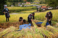 A mother supervises as her two daughters harvest rice. Once the stalks are cut, they are beaten on a tarp to make the rice kernels come off. Robert Dodge, a Washington DC photographer and writer, has been working on his Vietnam Unexpected project since 2005. The project has taken him throughout Vietnam, including Hanoi, Ho Chi Minh City (Saigon), Nha Trang, Mue Nie, Phan Thiet, the Mekong, Sapa, Ninh Binh and the Perfume Pagoda. His images capture scenes and people from women in conical hats planting rice along the Red River in the north to men and women working in the floating markets one the Mekong River and its tributaries. Robert's project also captures the traditions of ancient Asia in the rural markets, Buddhist Monasteries and the celebrations around Tet, the Lunar New Year. Also to be found are images of the emerging modern Vietnam, such as young people eating and drinking and embracing the fashions and music of the west. Robert Dodge, a Washington DC photographer and writer, has been working on his Vietnam Unexpected project since 2005. The project has taken him throughout Vietnam, including Hanoi, Ho Chi Minh City (Saigon), Nha Trang, Mue Nie, Phan Thiet, the Mekong, Sapa, Ninh Binh and the Perfume Pagoda. His images capture scenes and people from women in conical hats planting rice along the Red River in the north to men and women working in the floating markets one the Mekong River and its tributaries. Robert's project also captures the traditions of ancient Asia in the rural markets, Buddhist Monasteries and the celebrations around Tet, the Lunar New Year. Also to be found are images of the emerging modern Vietnam, such as young people eating and drinking and embracing the fashions and music of the West.
