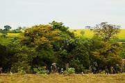 Sao Jose do Rio Preto_SP, Brasil...Programa Biota da Unesp, na foto uma paisagem...The Biota program of Unesp, in this photo the landscape.. .Foto: JOAO MARCOS ROSA /  NITRO