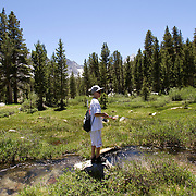 Rock Creek and Mosquito Flats area west of Crawley Lake in Eastern Sierras.