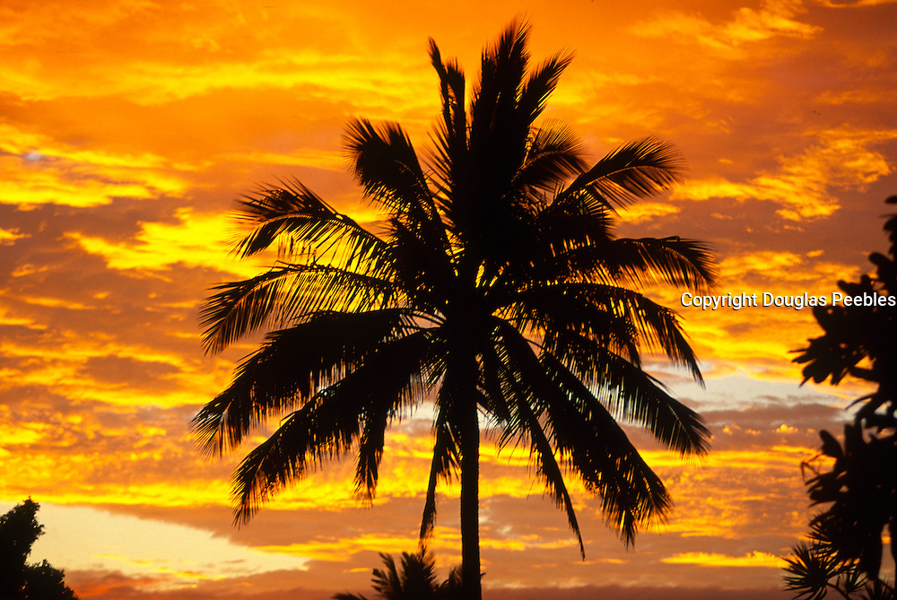 Palm tree in sunset<br />
