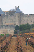 Carcassonne. Languedoc. View over the old city. Vines trained in Guyot cane pruning. Men pruning vines. A rainy and misty winter day. France. Europe. Vineyard.