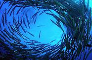 Malaysia Underwater