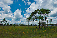 Open prairie in the Big Cypress National Preserve. This is a wonderland for nature photographers, as it is loaded with all kinds of wildlife and rare plants.