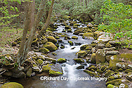 66745-038.17 Roaring Fork in spring, Roaring Fork Motor Trail, Great Smoky Mountain National Park, TN