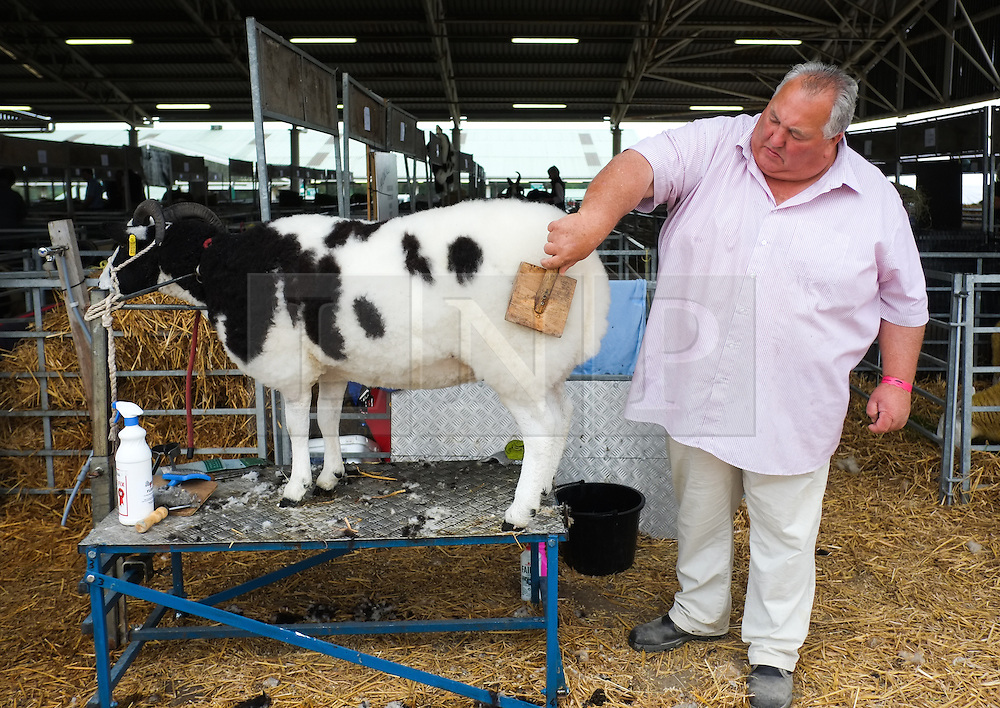 © Licensed to London News Pictures. <br /> 08/07/2014. <br /> <br /> Harrogate, United Kingdom<br /> <br /> A sheep is brushed prior to its show on the first day of the Great Yorkshire Show. The show is England's Premier Agricultural Event and is based on the 250-acre Great Yorkshire Showground near Harrogate. The Main Ring is the hub of the Show providing a setting for international show jumping and world class cattle parade. The showground is filled with animals, country demonstrations, have-a-go activities and rural crafts.<br /> <br /> Photo credit : Ian Forsyth/LNP