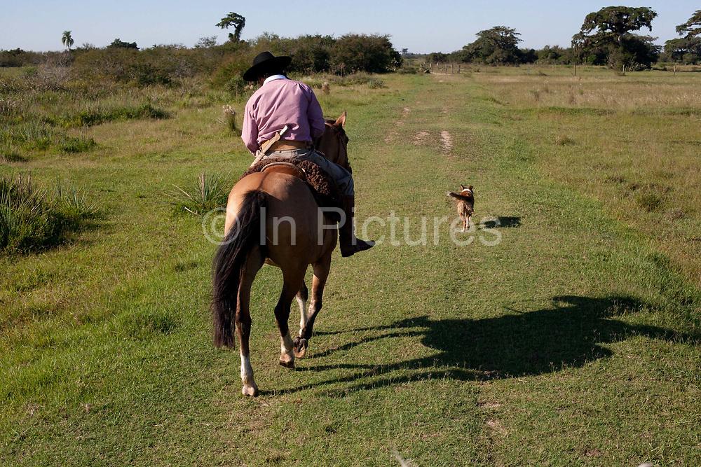 Brazilian male Gaucho cowboy riding a horse through a field pasture. Working Gaucho Fazenda farm in Rio Grande do Sul, Brazil.