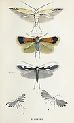 Plate XII 1. Little Waggoner. 2. Golden Pigmy. 3. Golden Spot. 4. White Plume. 5. Stone Plume. from the book ' The common moths of England ' by Wood, J. G. (John George), 1827-1889 Publication date 1878 in London : by G. Routledge and Sons