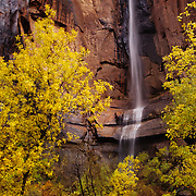 Temple of Sinawava in Zion Canyon, Zion National Park, Utah.