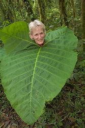 Woman in cloudforest with huge leaf around neck, Sachatamia Lodge, Mindo, Pichincha province, Ecuador, South America.  PR, MR