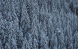 THEMENBILD - mit Schnee bedeckte Bäume, aufgenommen am 12. Dezember 2018 in Saalbach, Österreich // with snow-covered trees, Saalbach, Austria on 2018/12/12. EXPA Pictures © 2018, PhotoCredit: EXPA/ JFK