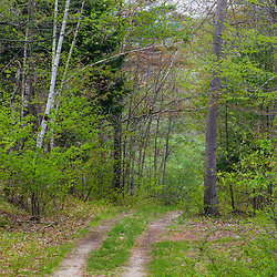 A dirt road in a forest in Durham, New Hampshire.