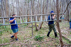 Kevin & Sam Carrying Ladder To Check Leadbeater's Possum Nest Box