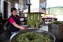 08.09.2015, Buchholz, GER, Weinlese, im Bild Beginn der Weinlese der Rebsorte Mueller-Thurgau, Anlieferung bei der Winzergenossenschaft // Beginning of the harvest of the grape variety Müller-Thurgau, delivery at the winery in Buchholz, Germany on 2015/09/08. EXPA Pictures © 2015, PhotoCredit: EXPA/ Eibner-Pressefoto/ Fleig<br /> <br /> *****ATTENTION - OUT of GER*****