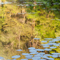 Morning reflections in a pond at the O.W. Stewart Preserve in Kingston, Massachusetts.