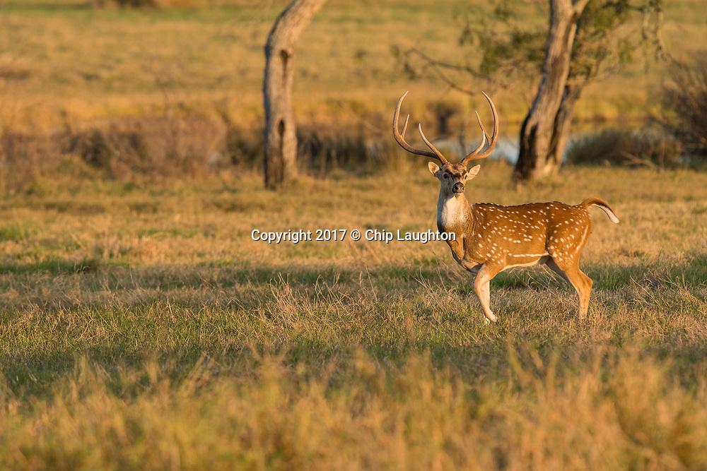 big game hunting stock photo image