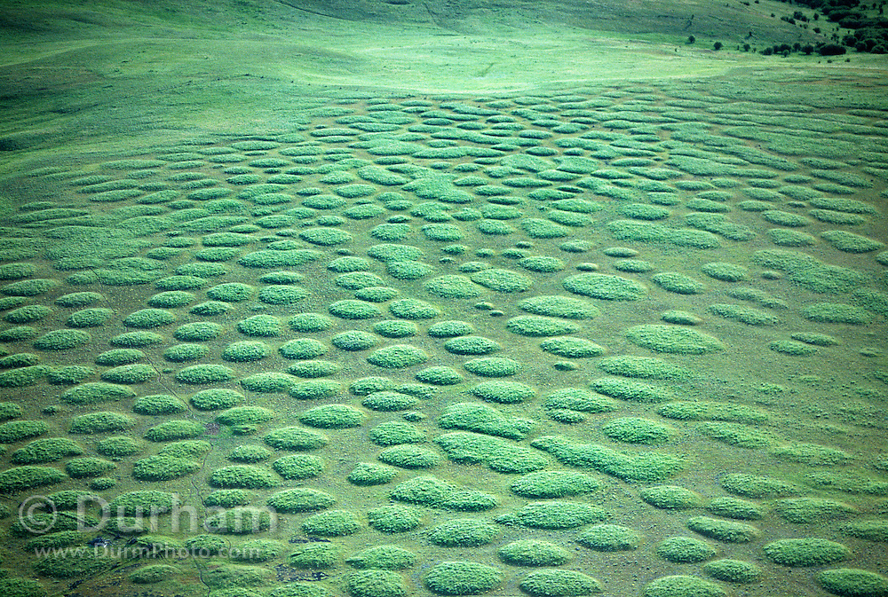 """Unusually regular mounds of earth and vegetation commonly refered to as """"mima mounds"""". Their formative mechanisms continue to be a mystery to scientists. Photographed from the air in spring at The Nature Conservancy's Zumwalt Prairie Preserve. Zumwalt Prairie is the largest remaining intact tract of native bunchgrass prairie in North America."""