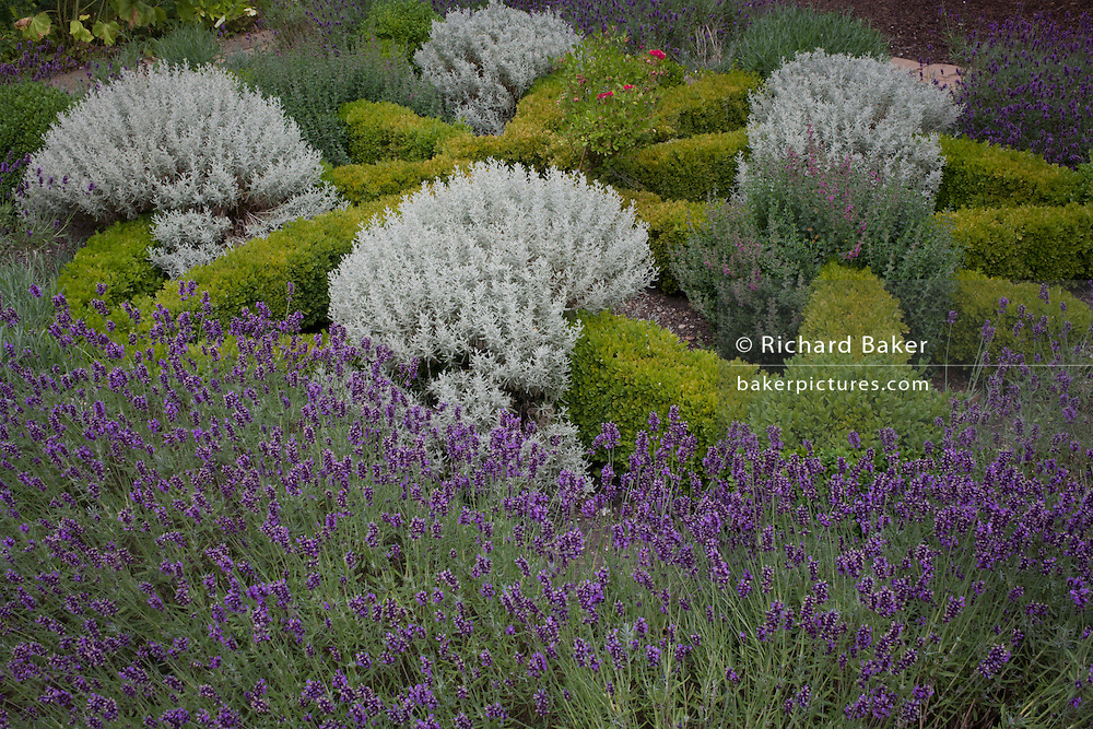Detail of a herb garden in the grounds of Norwich Cathedral, Norfolk.