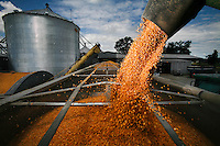 Corn is transferred to a truck at Schexnayder Farms in Erwinville, Louisiana.