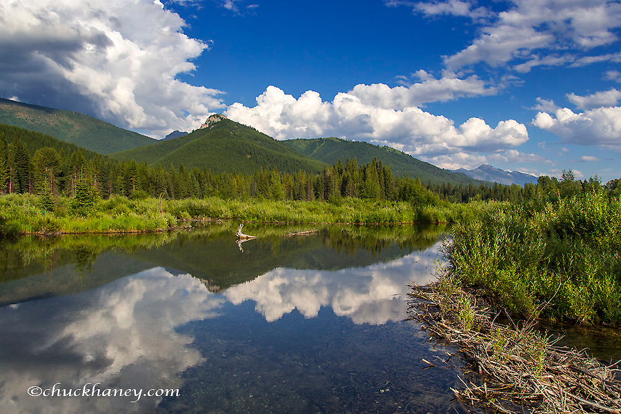 Beaver pond along the Flathead River near Fernie, British Columbia, Canada