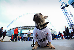 4 September 2017 -  2018 FIFA World Cup Qualifying (Group F) - England v Slovakia - A Dog in an England shirt sits below the Wembley Stadium arch - Photo: Marc Atkins/Offside
