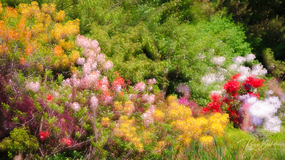 Flowers in Claude Monet's garden, Giverny, France