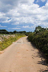 La primavera nella campagne comincia a diffondersi attraverso la crescita dell'erbetta, di fiori creando un suggestivo contrasto con gli alberi ed il cielo.