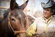 Farmer and horse, San Pedro de Atacama, Chile, South America