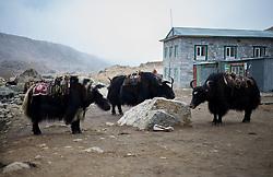 """THEMENBILD - Wanderung im Sagarmatha National Park in Nepal, in dem sich auch sein Namensgeber, der Mount Everest, befinden. In Nepali heißt der Everest Sagarmatha, was übersetzt """"Stirn des Himmels"""" bedeutet. Die Wanderung führte von Lukla über Namche Bazar und Gokyo bis ins Everest Base Camp und zum Gipfel des 6189m hohen Island Peak. Aufgenommen am 17.05.2018 in Nepal // Trekkingtour in the Sagarmatha National Park. Nepal on 2018/05/17. EXPA Pictures © 2018, PhotoCredit: EXPA/ Michael Gruber"""
