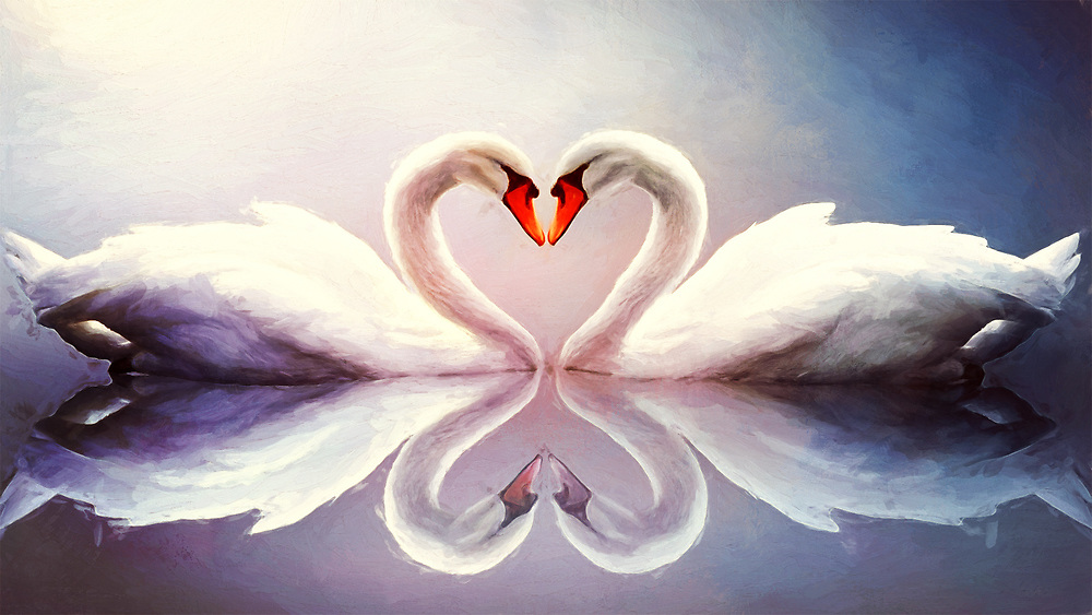 Two Romantic Swans Showing Some Love