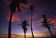 Palms at sunset<br />