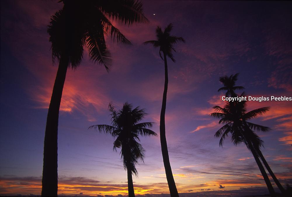 Palms at sunset<br />