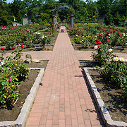 at the Bon Air Memorial Rose Garden in Arlington, Virginia. The garden is located next to a park and Four Mile Run.