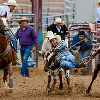 Steer wrestler Jeremiah Jodie takes his steer down during the Gallup Intertribal Indian Ceremonial Rodeo at Red Rock Park in Gallup Friday.