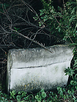 https://Duncan.co/nature-consuming-a-couch