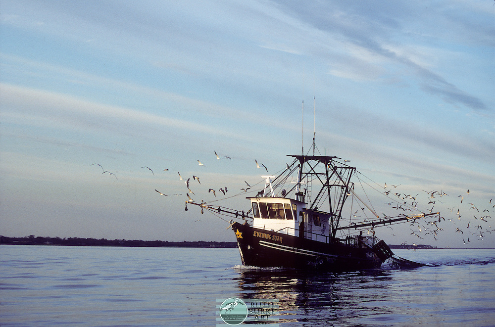 Shrimp Boat In Bay