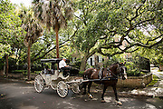 A horse drawn carriage on Legare Street in Charleston, SC.