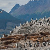 Beagle Channel, Tierra del Fuego, Argentina.