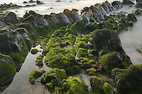 Sea landscape near Cabo Sardão, Southwest Alentejo and Vicentine Coast Natural Park, Portugal