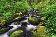 Steelhead Creek in the Hayward Lake Recreation Area in Mission, British Columbia, Canada