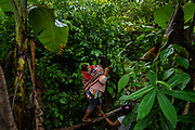 Chimoré, Bolivia. 08/01/2020. Cocalera ( coca leaf growers ) walks carrying his son on his back on a trail that gives access to her coca plantation in the rural area of Chimoré, in the Chapare region, the main production area of coca used by drug trafficking.