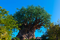 Tree of Life, Discovery Island, Disney's Animal Kingdom, Walt Disney World, Orlando, Florida USA