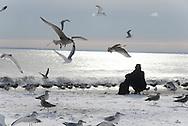 New York. Brooklyn. Coney island. beach  in winter .
