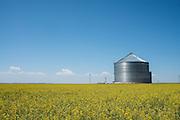 A field of canola grows near a grain silo north of Mangum, Oklahoma