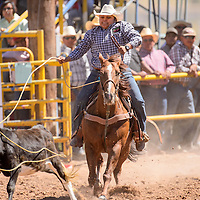 Breakaway roper Odesa Yazzie completes a winning 2.5 second run during the Navajo Nation Fair rodeo in Window Rock Saturday.